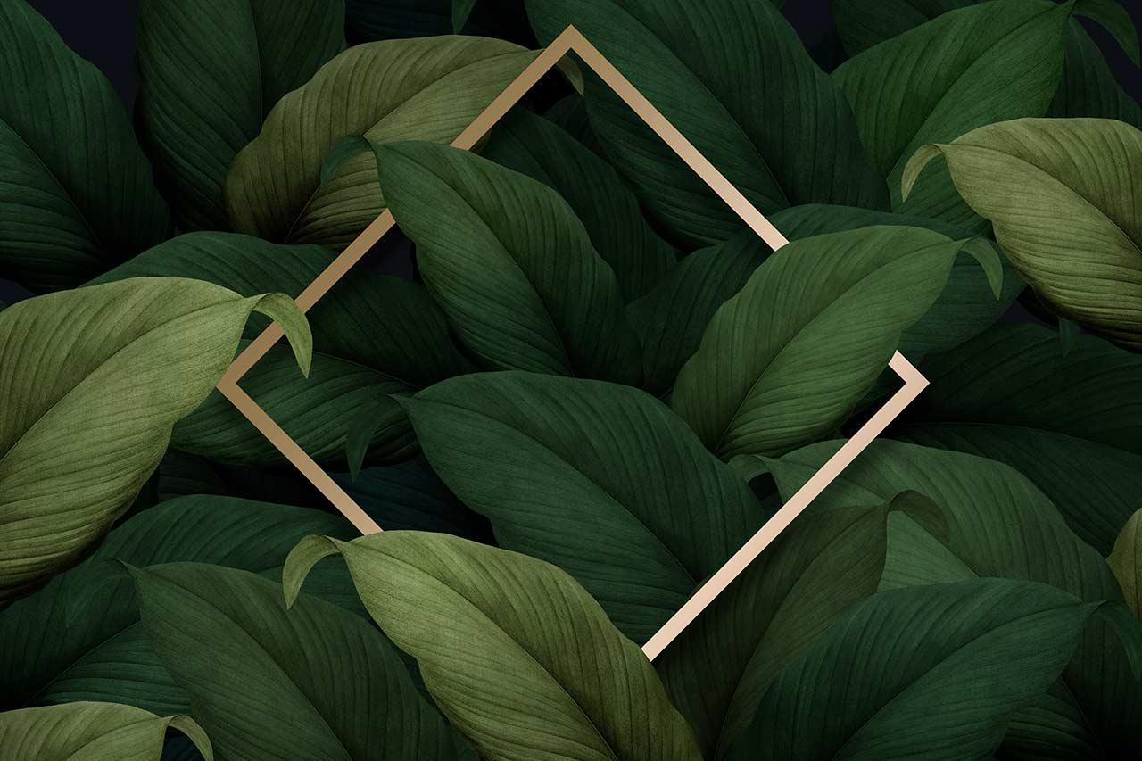 Pflanze mit Rahmen