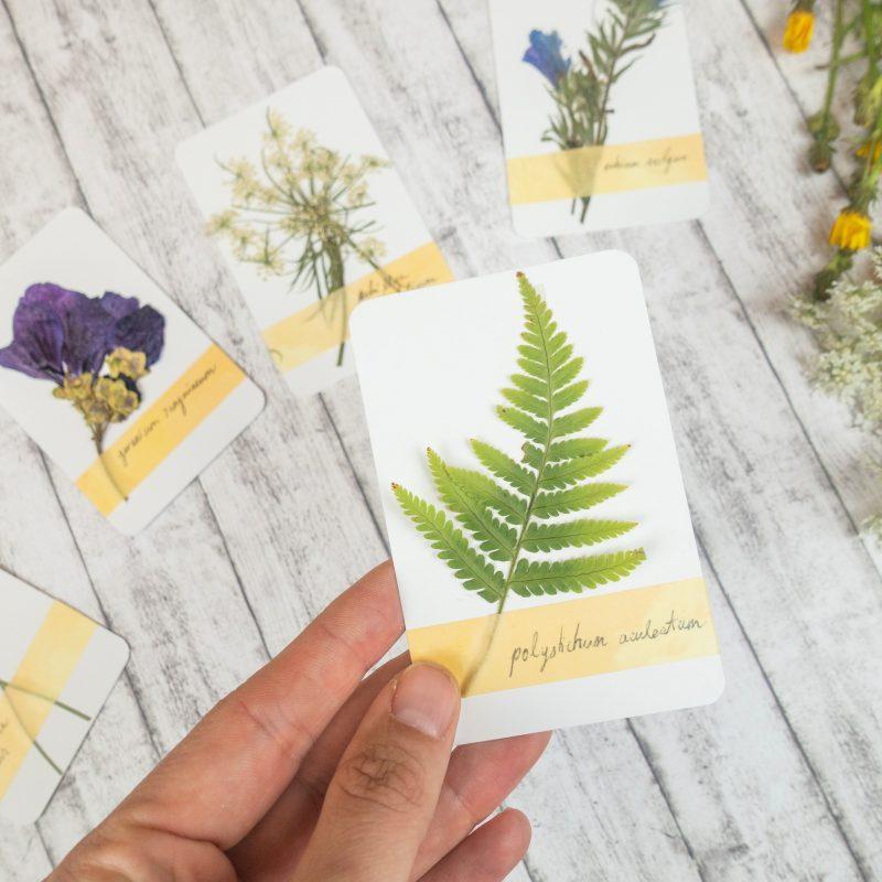 Herbarium Pflanzensammlung